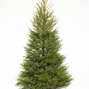 Suur jõulukuusk XL