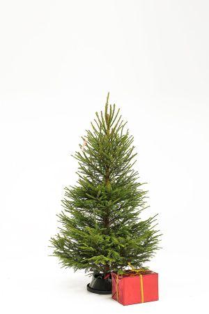 Joulukuusk-mini-eestikuusk.ee